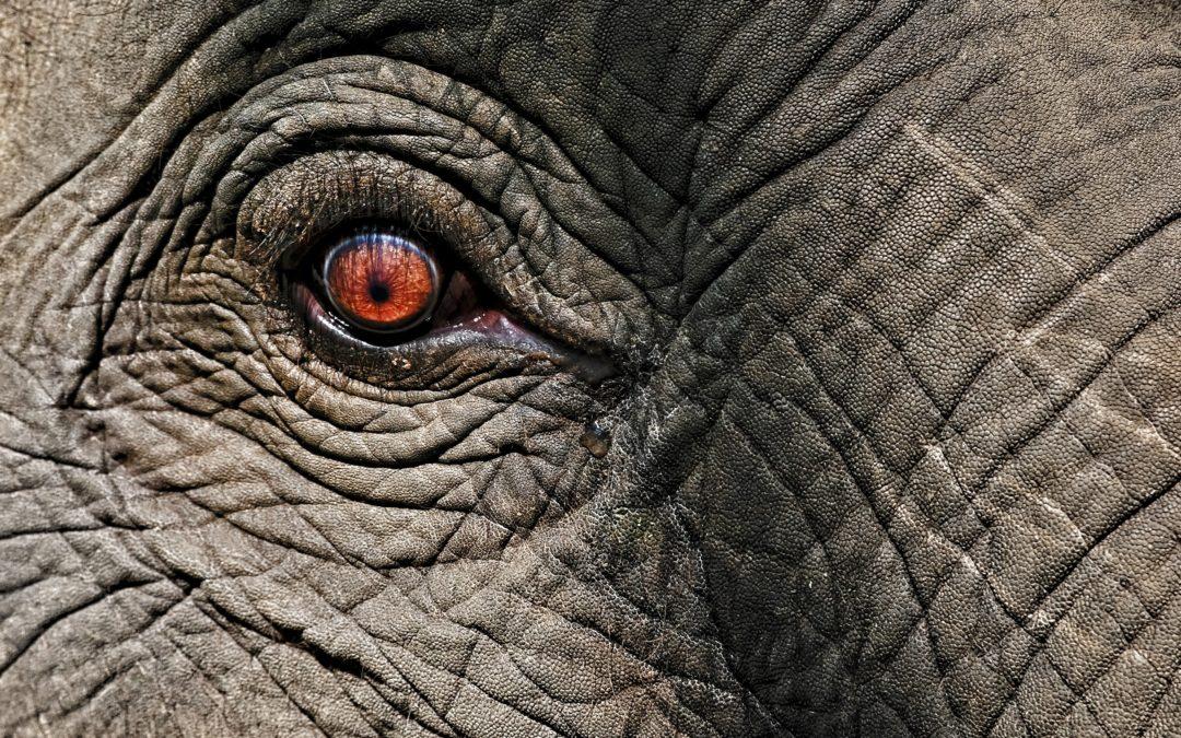 Over schriftelijke vragen: er is een olifant in deze kamer